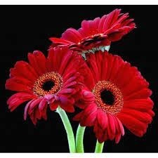 Online Flower Delivery in Delhi Because Family Matters