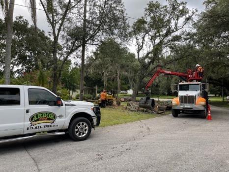 Arbor Bay Tree Service