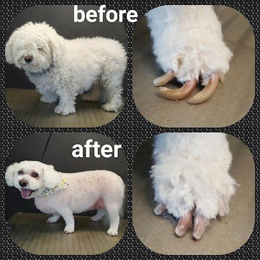 Mobile Pet Grooming Broomfield
