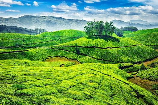 Sight Seeing In Munnar