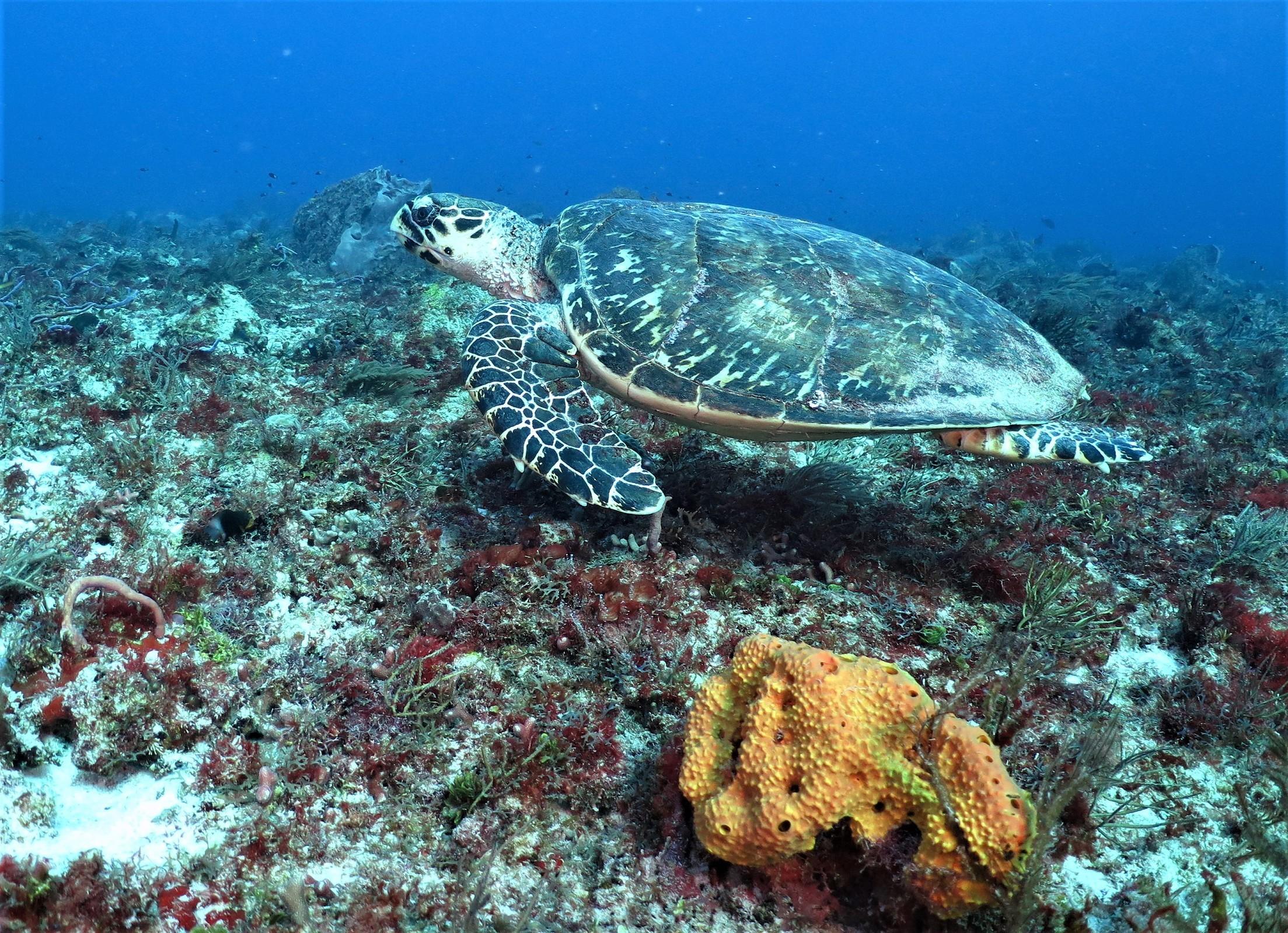 OCEAN Diving