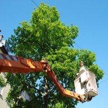 Licensed and Insured Tree service