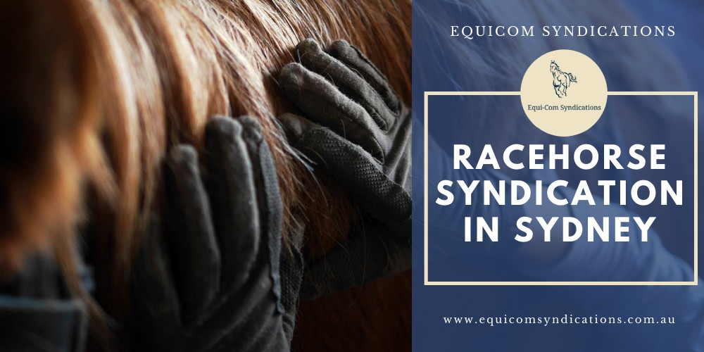 Racehorse Syndications in Sydney - Equicom Syndications