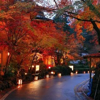 Japan autumn tours