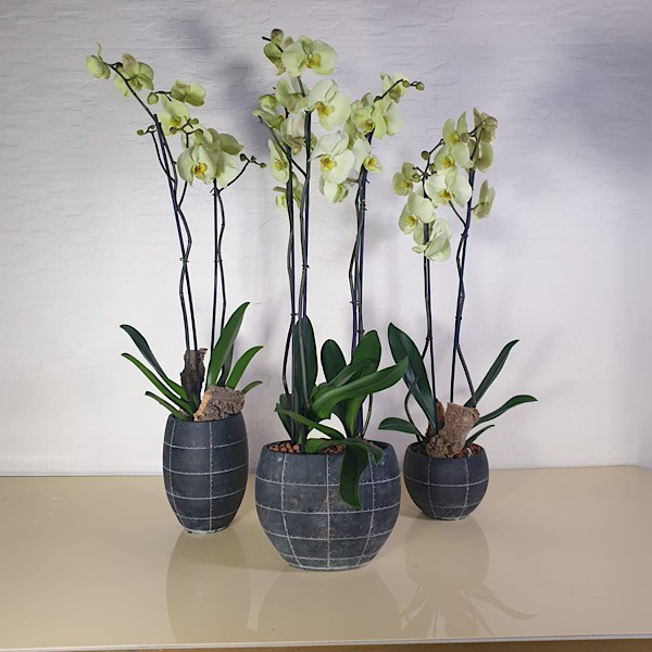 Premium Flowers and Plants Online Delivery | Mashatel