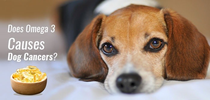 Does Omega 3 Causes Dog Cancers? Let's Find Out