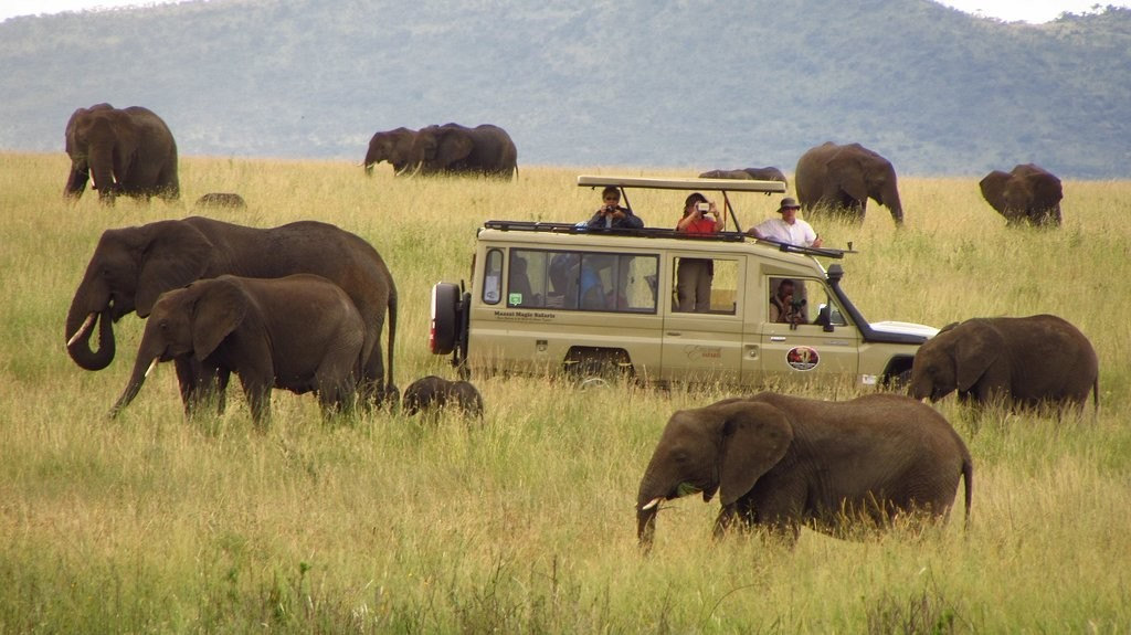 Tanzania Safari | Game drive adventure