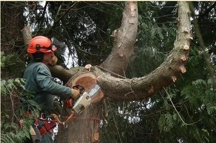 Wally's Tree Service