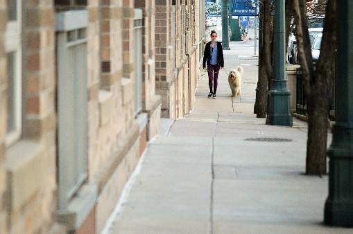 WellHaven Pet Health Denver