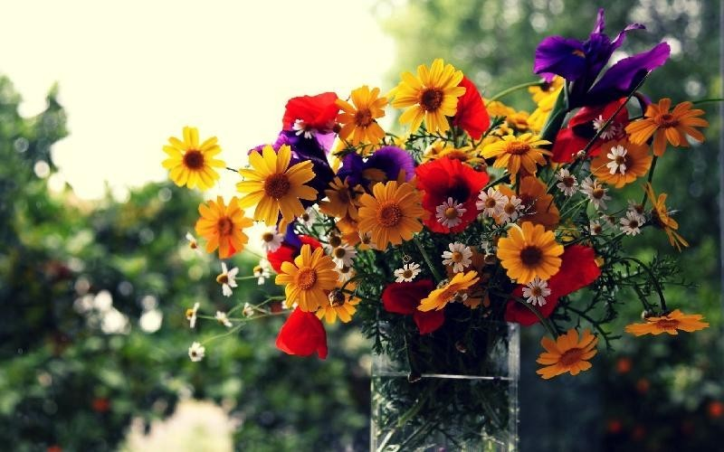 Make Her Fall in Love with Flower Delivery in Hyderabad