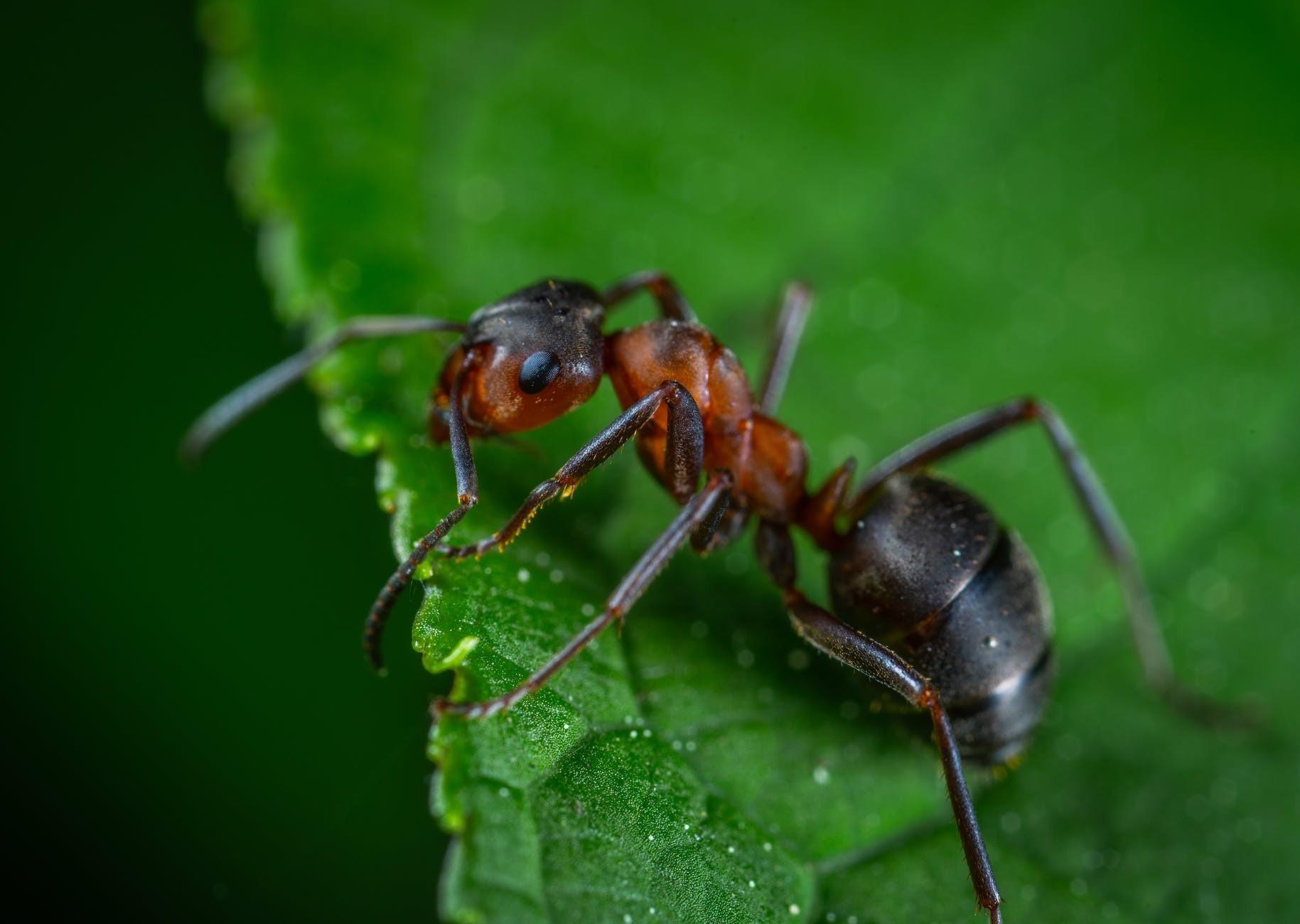 Exterminator Maple Valley