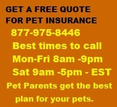FREE PET INSURANCE QUOTE