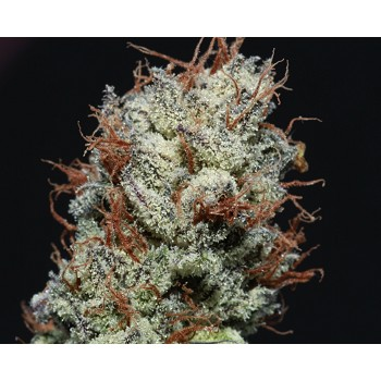 Cupcake's Cannabis