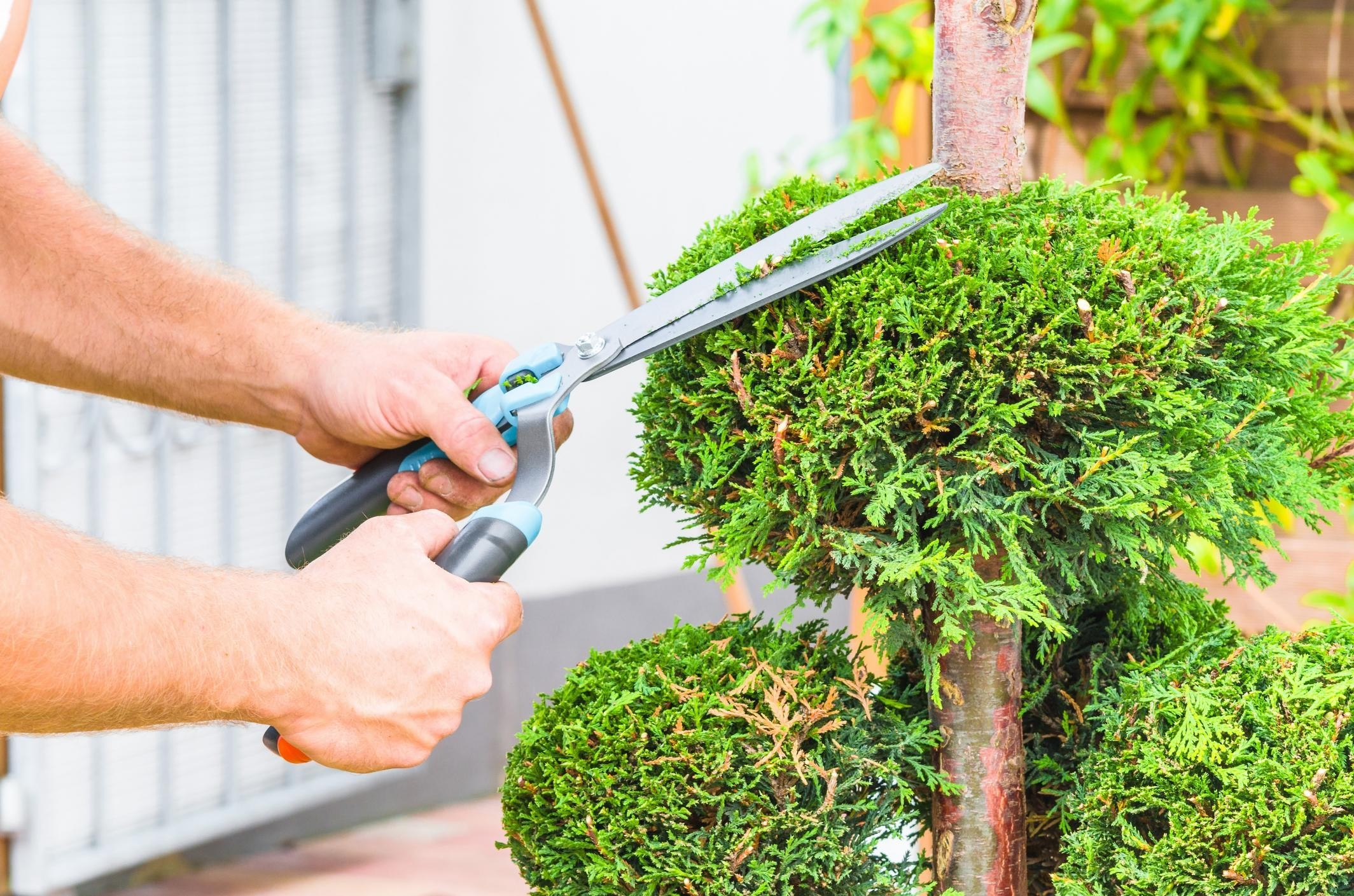 California Tree Services