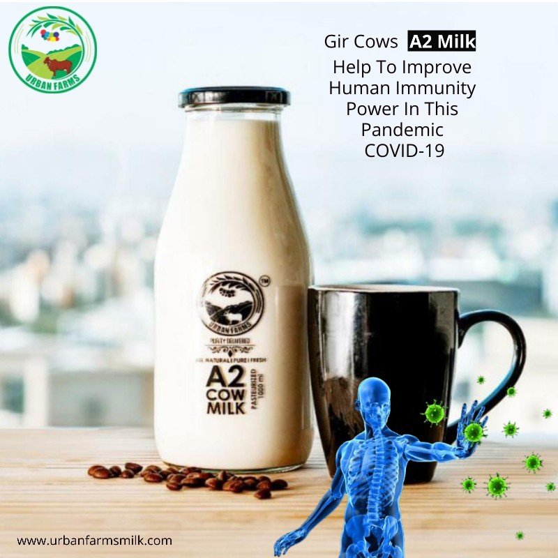 a2 milk in pune