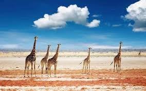 Emmarosh Travel-Tanzania