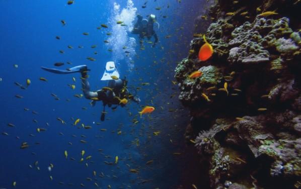 Dive Oahu - Open Water Dive