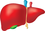 Is liver transplant a major surgery? Know Everything about liver transplant surgery