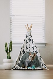 Tips to make your pet comfy at home