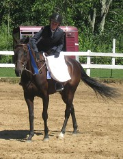 Planning to buy Horse in MA USA  Apple Creek Farm horse