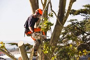Why You Should Hire Tree Removal Scarborough– Top Reasons Explained