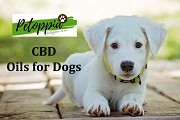 Can You Really Trust CBD Treats for Dogs and Cats?