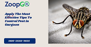 Apply The Most Effective Tips To Control Pest in Gurgaon