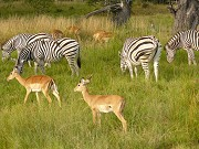 Victoria Falls Day Trips The Exciting Way To Explore The Natural Wonders