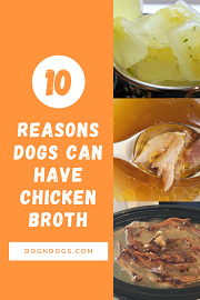 Can Dogs Have Chicken Broth